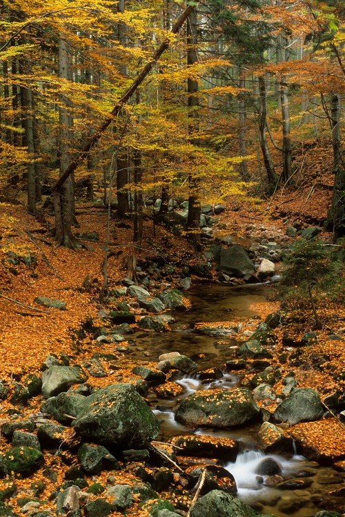 Kamienczyk Brook in Fall