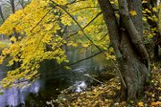 Autumn over the Drawa River